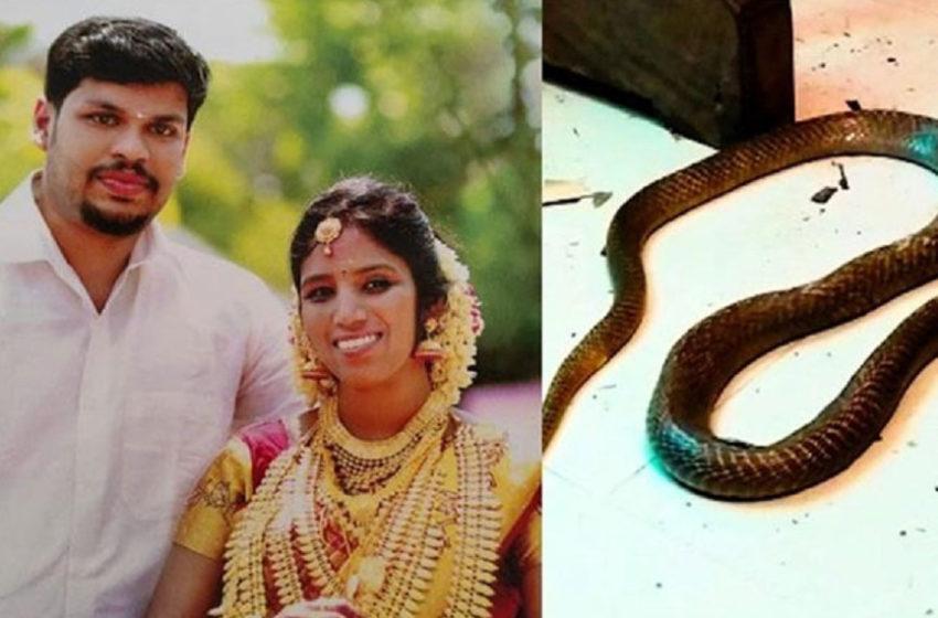 Հնդկաստանում տղամարդը դատապարտվել է երկու ցմահ ազատազրկման կնոջը կոբրայով սպանելու համար